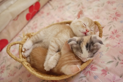 Kittens in a basket. | by shalfe0121