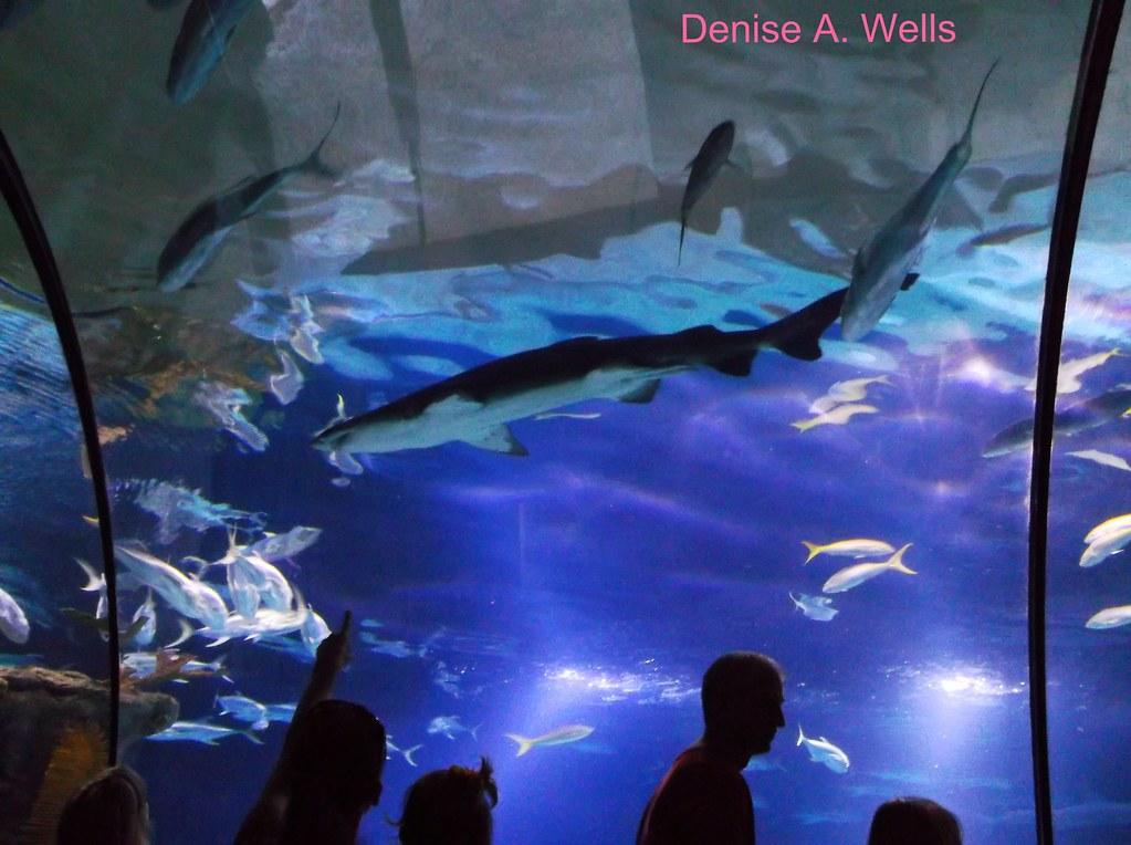 Shark Tunnel And Aquarium In Omaha Ne Denise A Wells