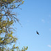 Swallow Flying Towards Tree