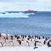 Antarctica-111123-387