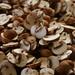 mushroom prosciutto lasagna 1