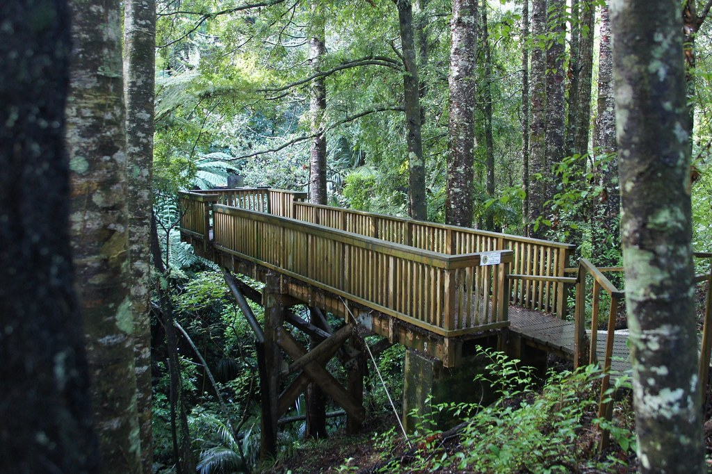 Parry Kauri Park | itravelNZ® - New Zealand in your pocket ...
