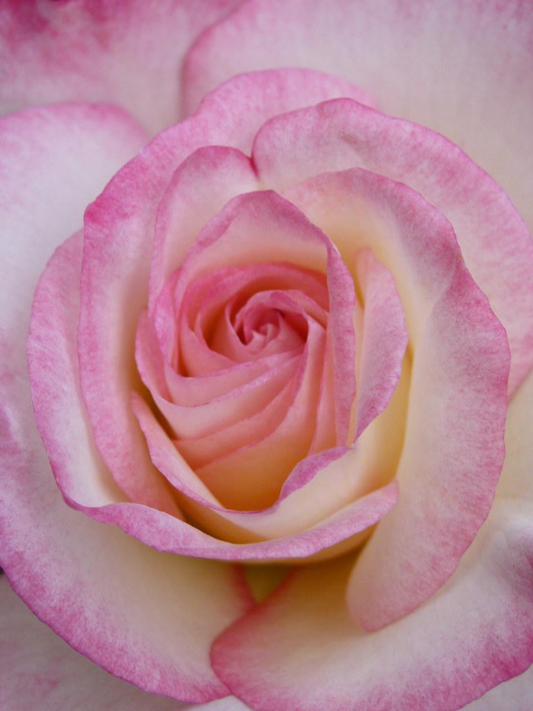 Rose Birthday Girl Flintham Notts 19th June 2012 Simon
