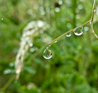 Day 199 of 366 Grass Bubbles (explore) | by Chris Willis 10