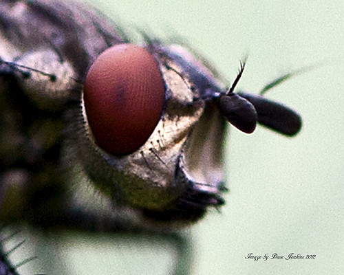 The face of a fly | by DAVE-JKS