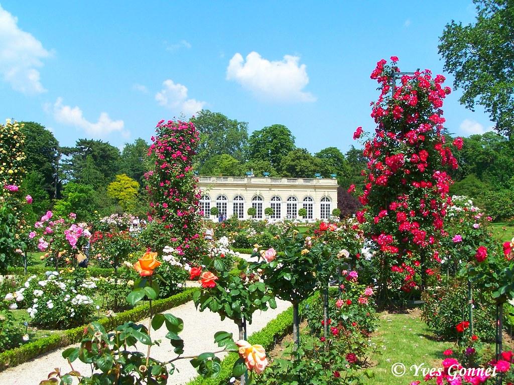 Roseraie parc de jardin de bagatelle bois de boulogne for Jardin bagatelle