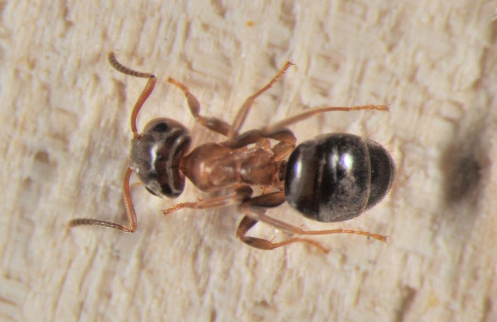 Image result for pest control flickr