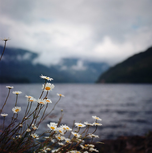 lake crescent and the daisies: #1 | by manyfires