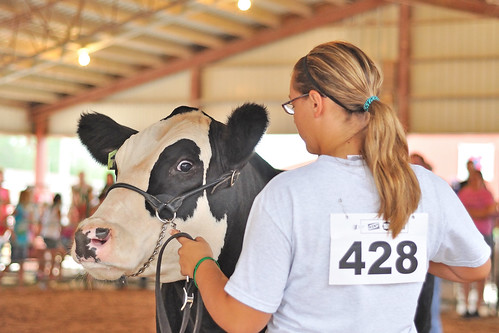4H Cattle Show | by dlholt
