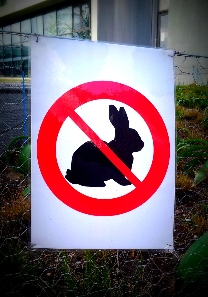 About >> No rabbit trespassing | No rabbits are allowed beyond this