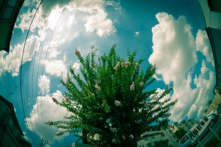 Day 218/366 : Summer Sky with Crape Myrtle | by hidesax