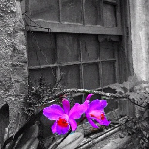 Old window and orchids | by _Renato Torres
