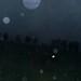 rain,rain,fog,beasts,dusk
