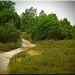 Lunenburg Heath