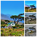 Ranch House Collage, Santa Rosa Island Channel Islands National Park
