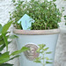Handmade Thyme herb label