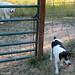 Follow that beagle 2