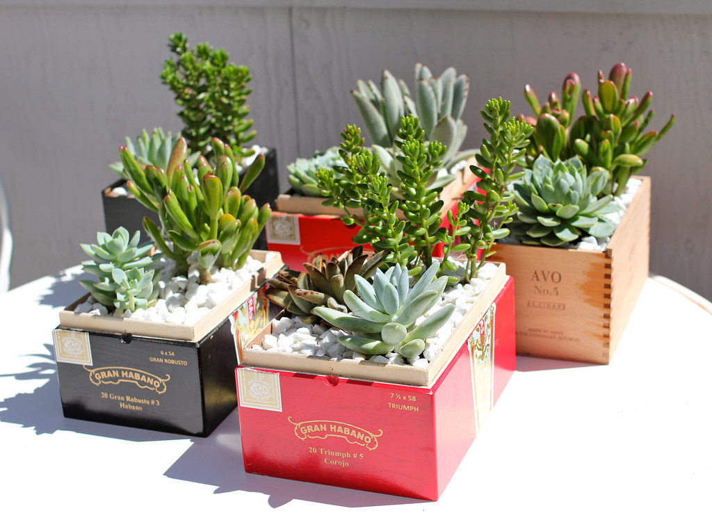 Matrimonio Forum : Wedding cigar box planters i planted succulents in