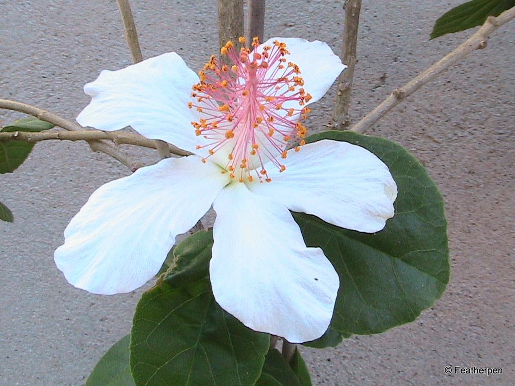 fleur du sud   bormes les mimosas, var   top a nice   flickr