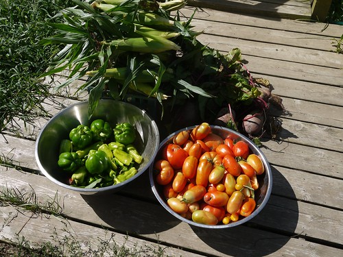 Late August Garden Harvest