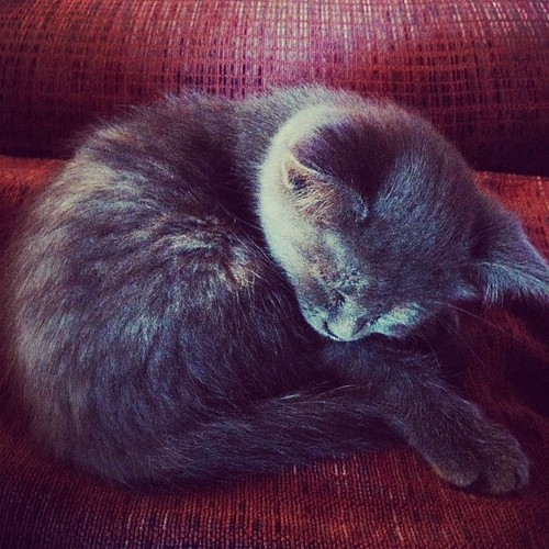 27/6.2012 - it's tiring being a little kitty | by julochka