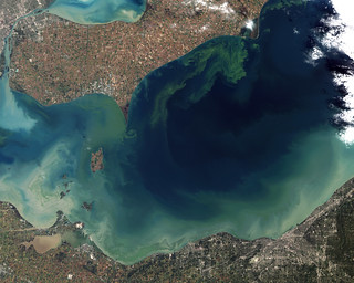 Toxic Algae Bloom in Lake Erie | by eutrophication&hypoxia
