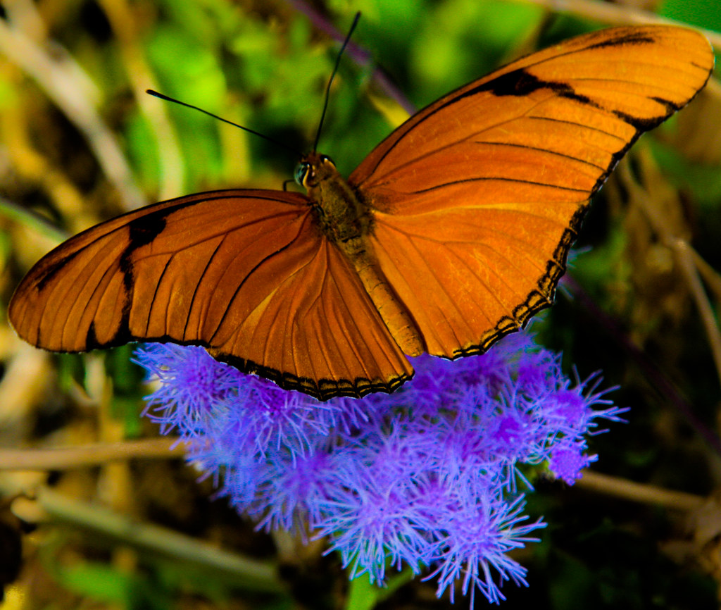 Colorful nature a butterfly rests on a colorful flower - Colorful nature pics ...