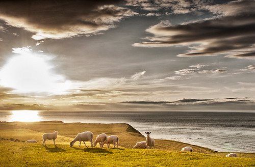 Sheep on the hill | by mswimfish