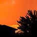 Digilux 1 : Seville Orange Sunset
