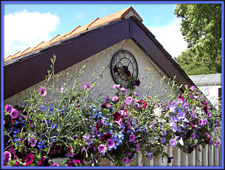 Flower Boxes! | by 'cosmicgirl1960' NEW CANON CAMERA