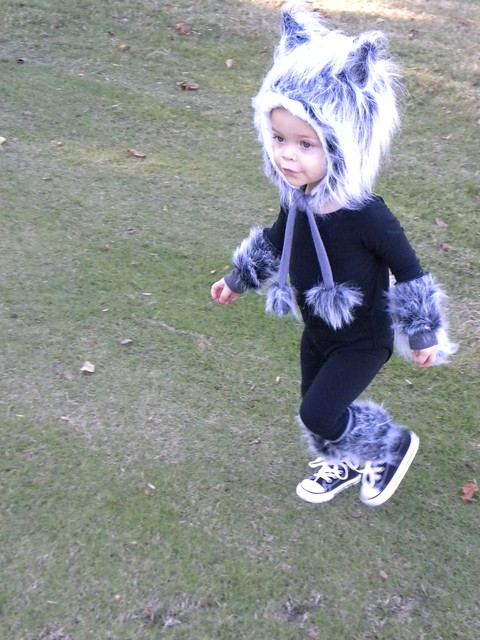 Baby Wolf Costume Flickr Sharing