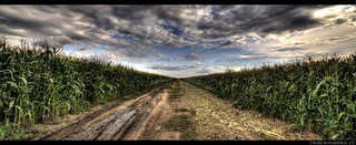 Endless Corn Field | by Point_Of_Light