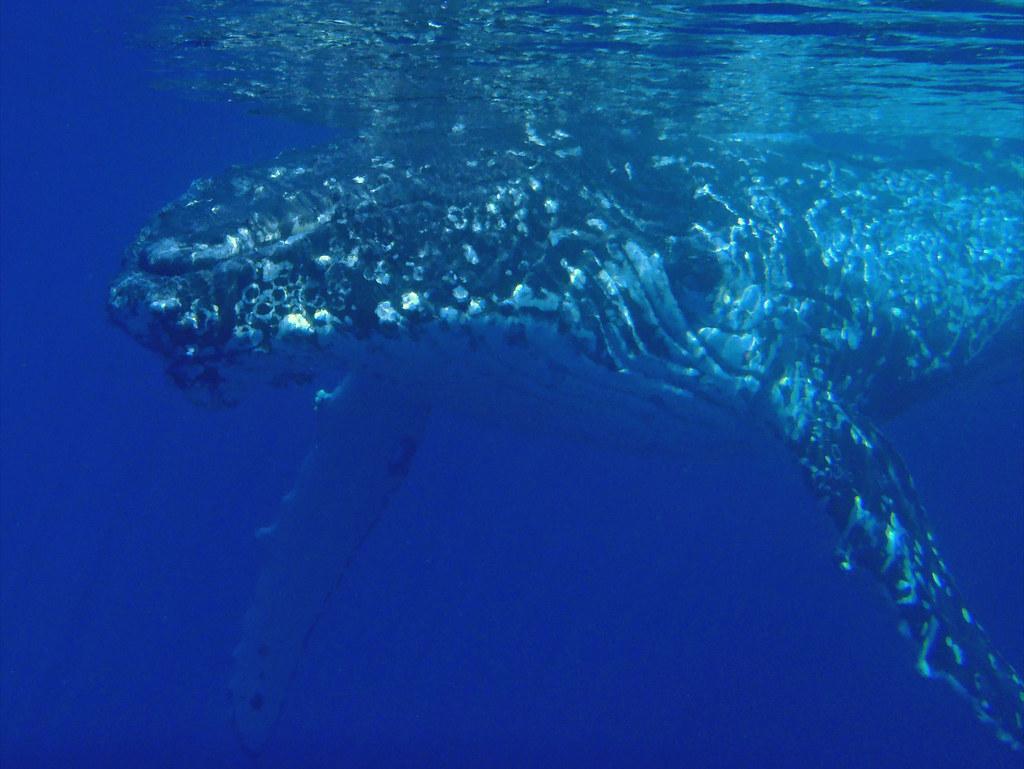 Best Dophin Tours In Puerto Vallarta