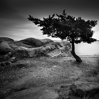 My Only Tree.. | by Peter Levi