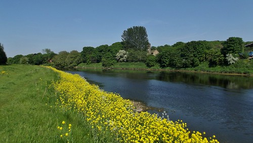 River Ribble at Brockholes Wetland Complex near Preston, Lancashire, England - May 2012 | by SaffyH