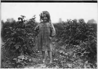 "Laura Petty, a 6 year old berry picker on Jenkins Farm. ""I'm just beginnin'. Licked two boxes yesterday,"" June 1909 