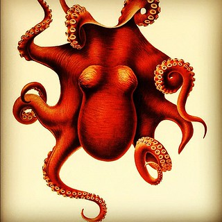 Orange #Octopus. From momentitus.tumblr.com. #art | by Heal the Bay