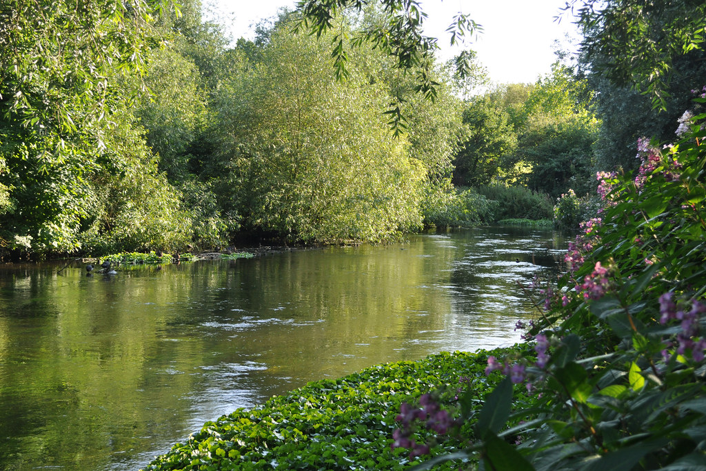River Wandle near Watermeads Nature Reserve ...