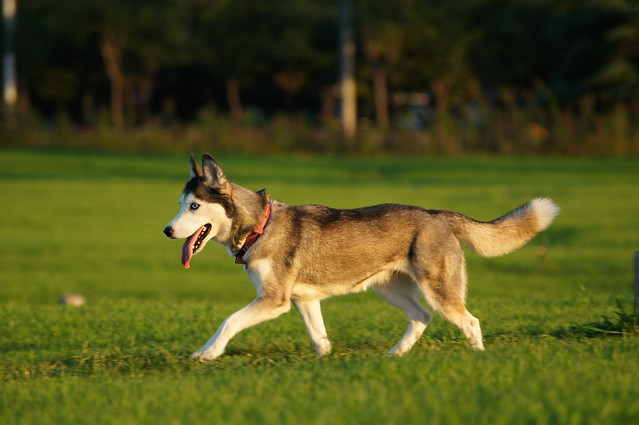 Alpha Dog Walking