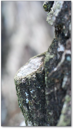 stump focus | by Leonard J Matthews