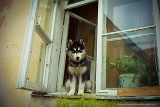 A dog in a window, Old Town, VIlnius | by jev