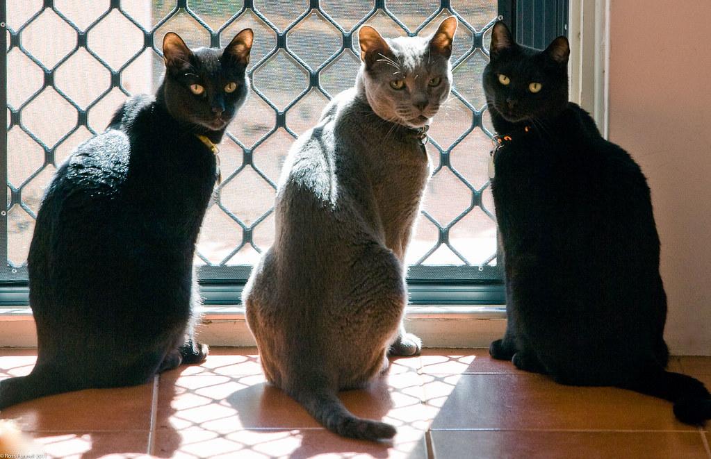 The three Russians