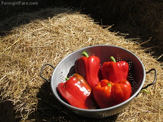 (19-15) King Arthur sweet red peppers from the kitchen garden - FarmgirlFare.com | by Farmgirl Susan