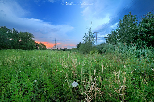 Little Green Land | by A. Shamandour