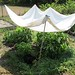 (19-1a) Making shade in the kitchen garden to help plants deal with the heat - FarmgirlFare.com