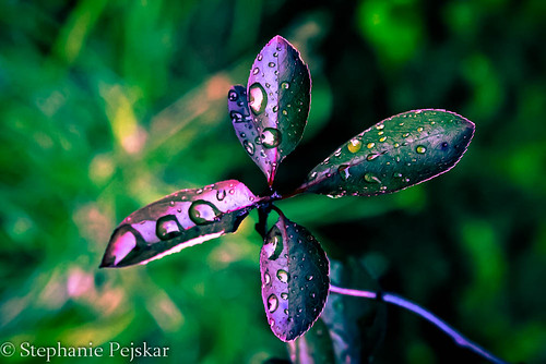 Purple Rain | by Stephanie Pejskar Photography