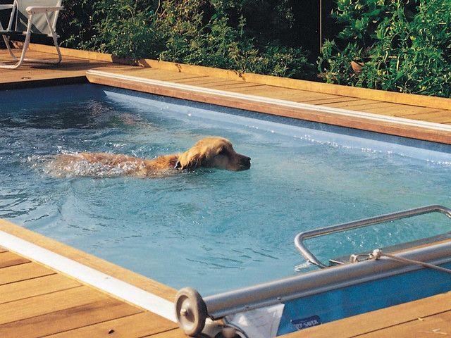 Endless Pool For Canine Aquatic Therapy Flickr Photo