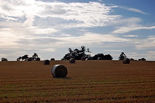 Round Hay Bales | by DaveJC90