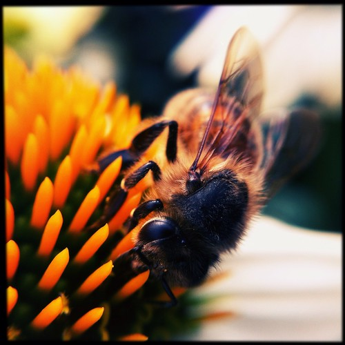 ...bee | by the3robbers