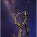 Star Crossed Tree
